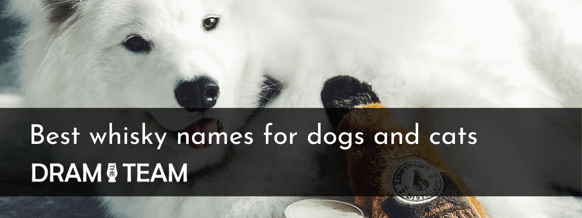 Best Whisky Names for dogs and cats